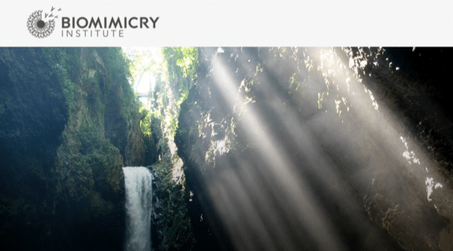 Biomimicry – Veracruz Expedition 2018