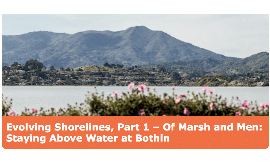 SHORELINE SHIFT, PART 1: OF MARSH AND MEN: STAYING ABOVE WATER AT BOTHIN MARSH, MILL VALLEY